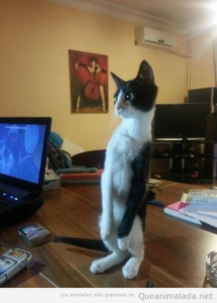 Foto graciosa de un gato de pie que parece un zombie
