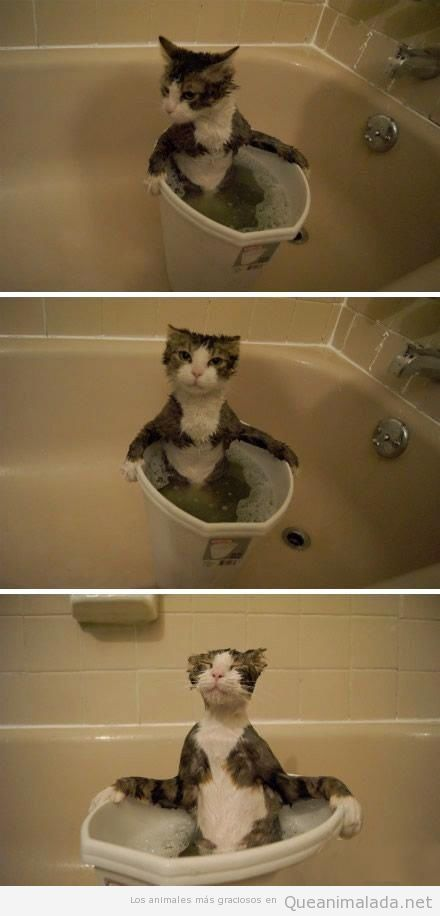 Imagen divertida de un gato bañándose