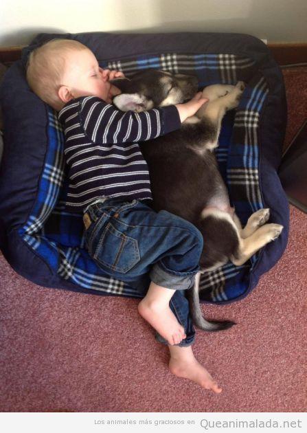 Imagen tierna y bonita de un bebé que duerme con su perro en la cama