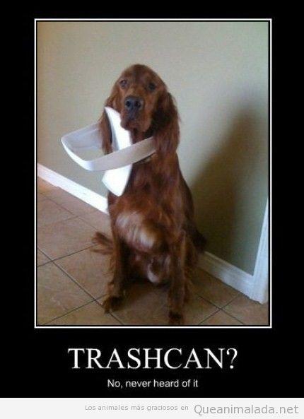 Perro con la parte de arriba de una basura en la cabeza