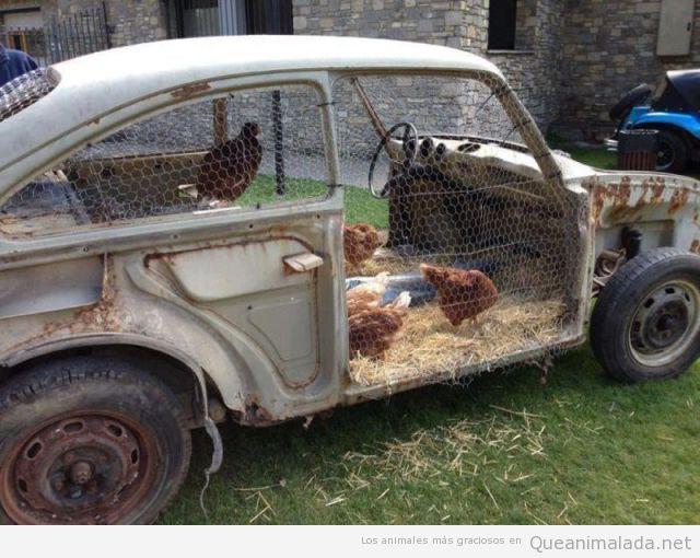 Corral de gallinas en un coche antiguo