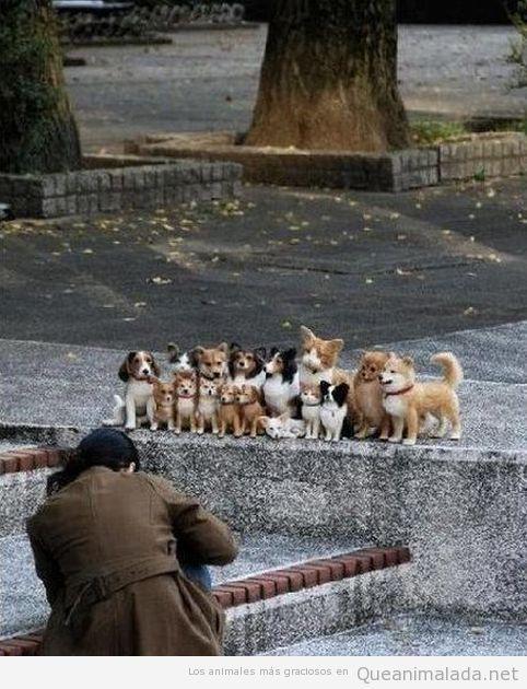 Imagen graciosa de muchos perros posando quietos y en familia para una foto
