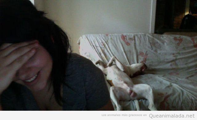 Imagen divertida de na chica en la webcam con perro detrás