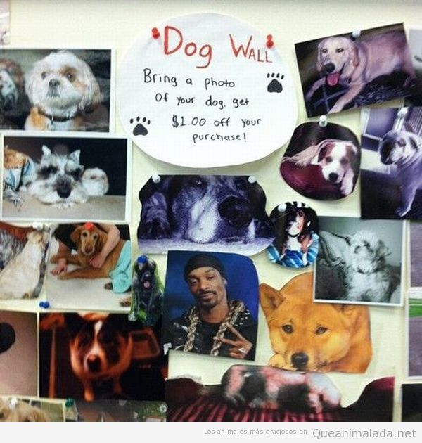 Mural de fotos de perros con Snoop Dog