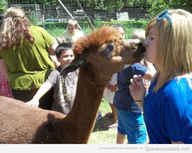 Foto bonita de una llama o alpaca dando beso mujer