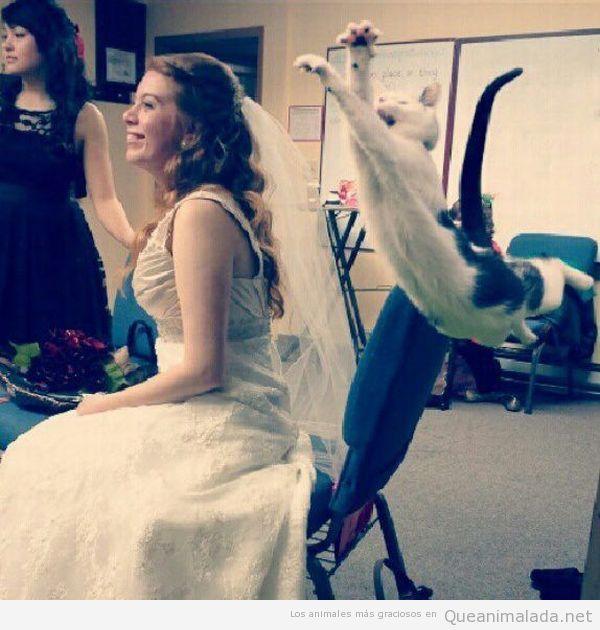 Imagen graciosa de un gato volando en una boda