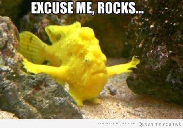 Imagen graciosa, meme de un pez amarillo entre rocas