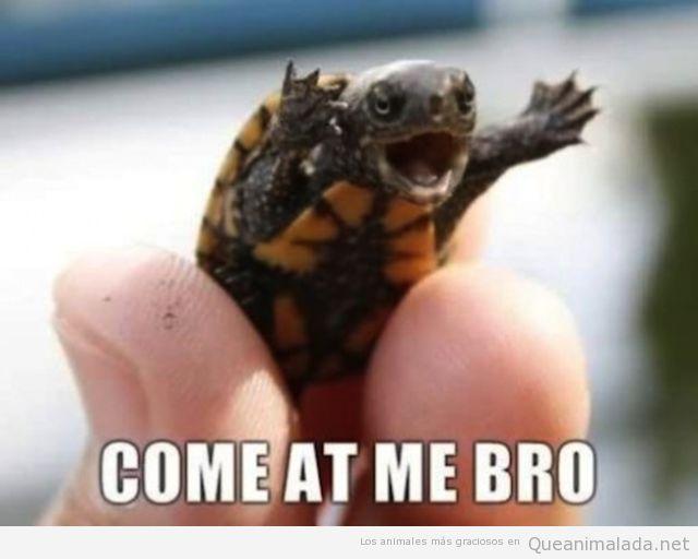 Imagrne divertida de una tortuguita