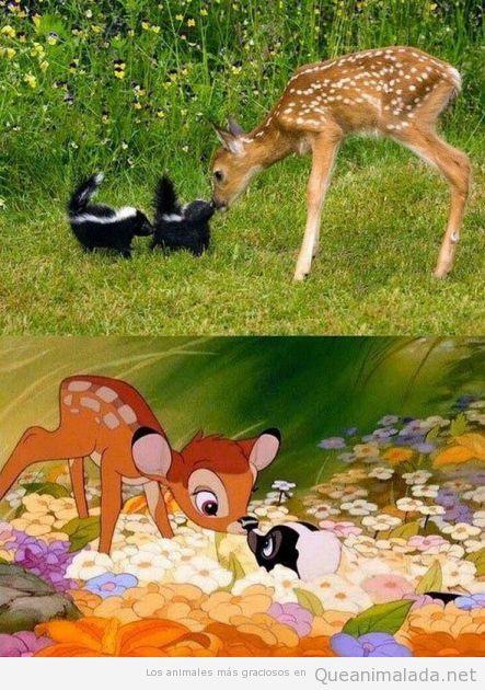 Imagen bonita de un cervatillo con mofetas, como en Bambi