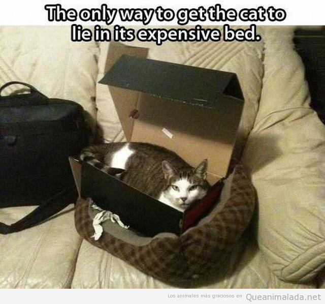 Foto graciosa gato caja zapatos