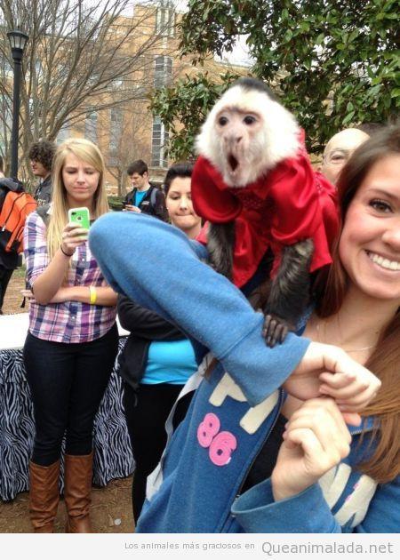Foto graciosa mono sorprendido