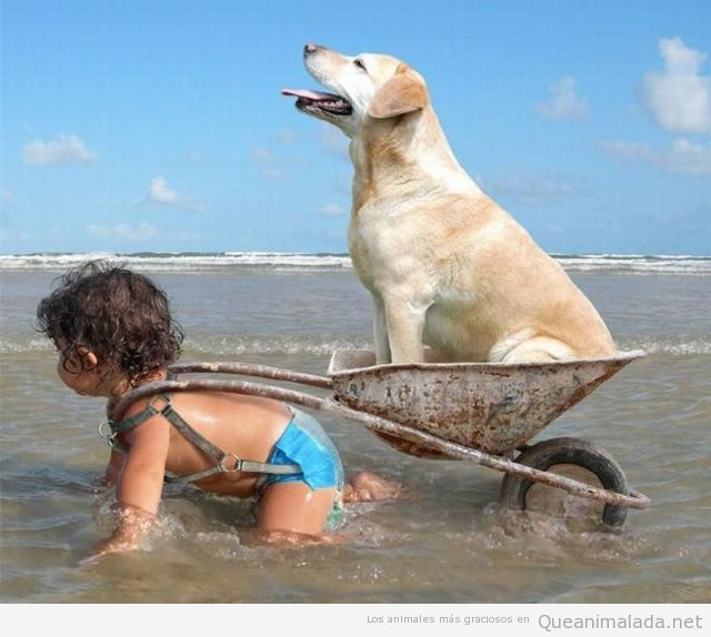 Foto graciosa de niña llevando en carrito a perro en la playa