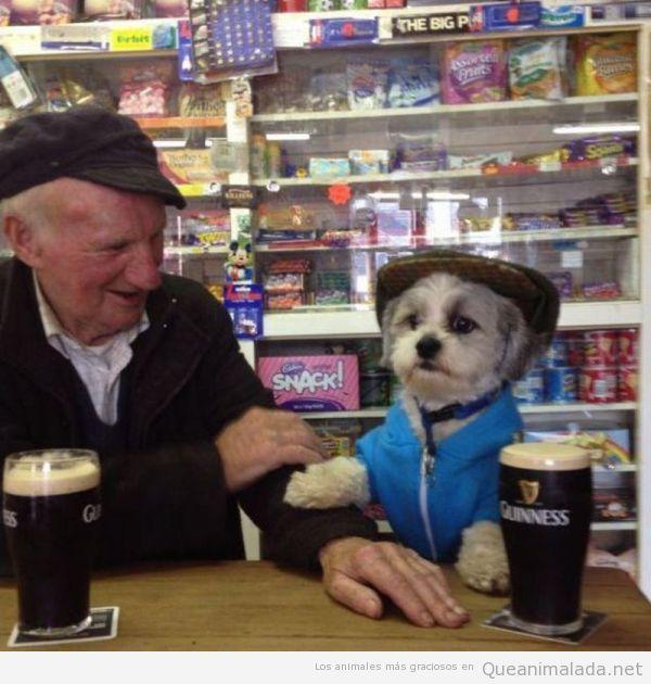 Foto graciosa, perro con chaleco y boina bebiendo cerveza Guiness