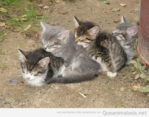Cadena de gatos durmiendo