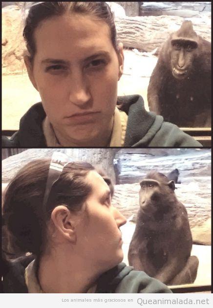 Imagen graciosa de un macaco troll en el zoo