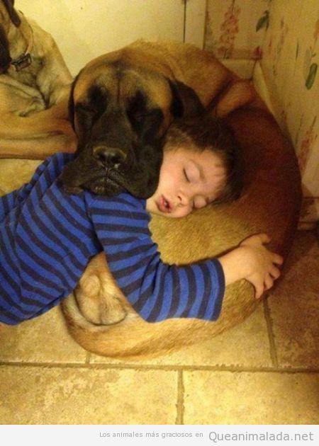 Niño durmiendo la siesta encima del perro