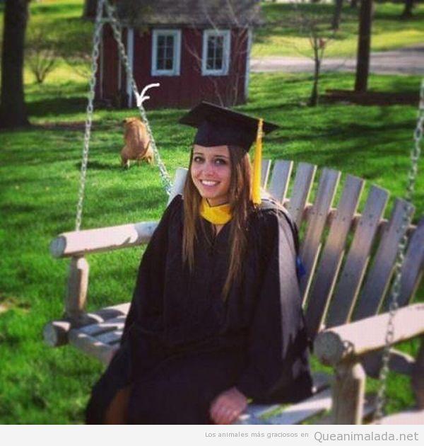 Perro jodefotos de graduación