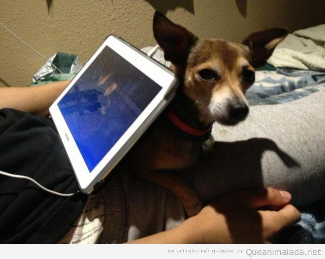 Usos de los perros: soporte de la tablet