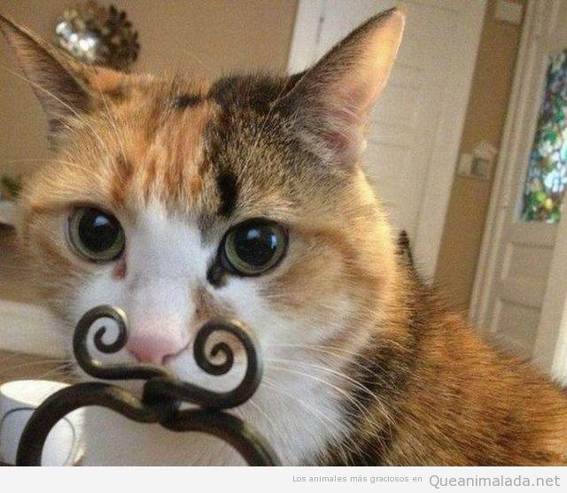 Foto graciosa de gato con bigote