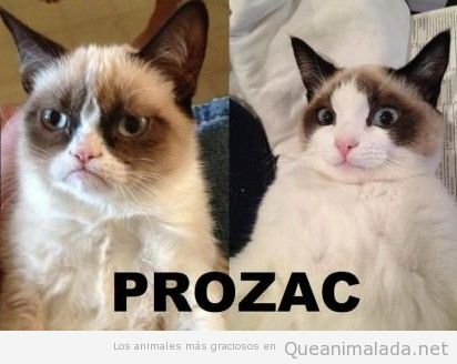Grumpy cat feliz después de tomar prozac