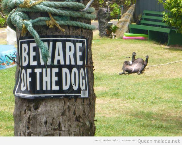 Foto graciosa, cuidado con el perro