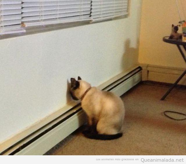 Imagen graciosa de un gato cara a la pared