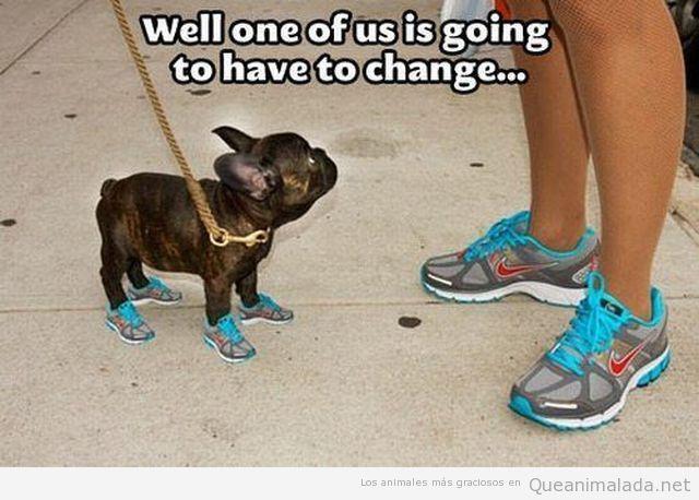 Imagen graciosa de un perro con zapatillas de deporte