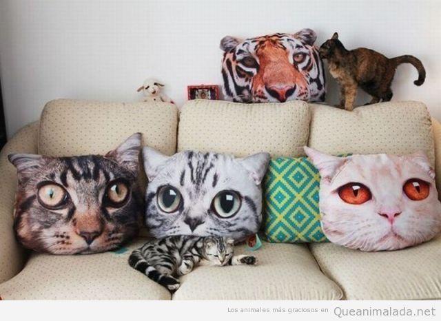 Cojines con la cara de gatos
