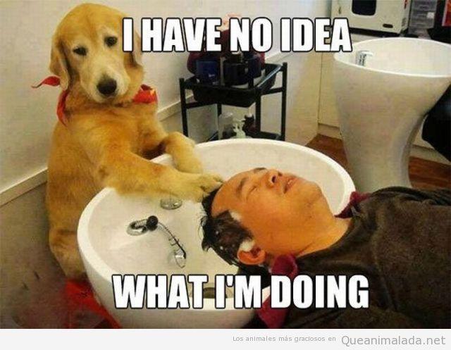 Imagen graciosa de un perro peluquero