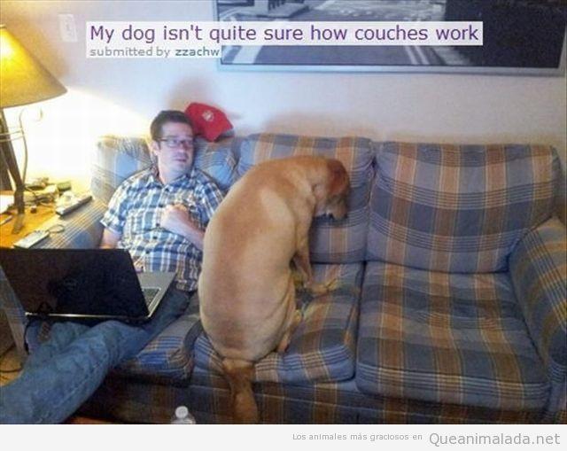 Imagen divertida de un perro en el sofá
