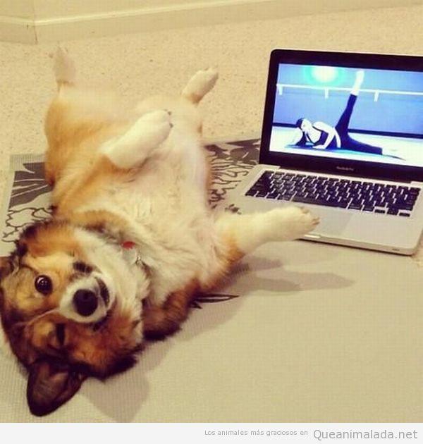 Foto graciosa de un perro haciendo pilates
