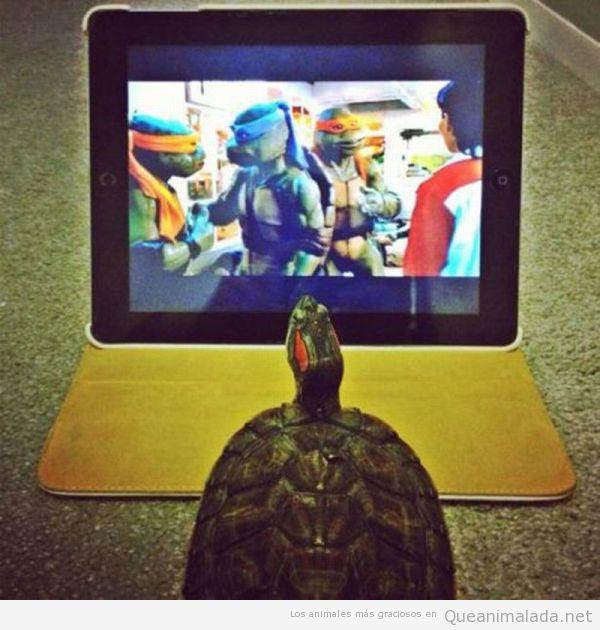 Foto gracioaa de una tortuga viendo la serie de las Tortugas Nija