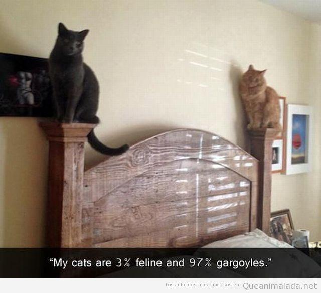 Imagen graciosa de dos gatos en el cabecero de una cama