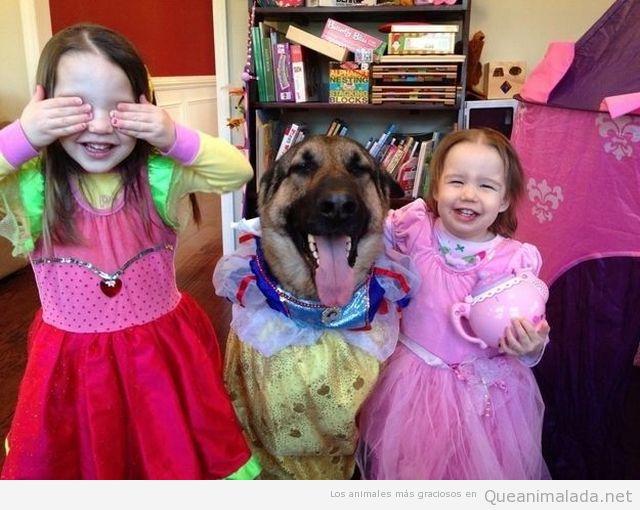 Imagen divertida de un perro jugando con niñas, disfrazado de Blancanieves