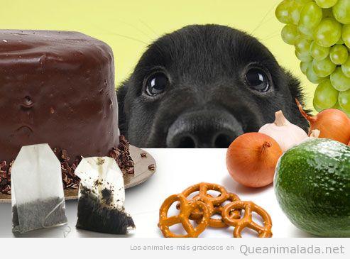 foto-graciosa-perro-comida-humanos