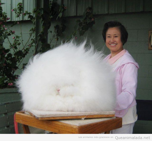 Foto gracioso de un conejo blanco con el pelo encrespado