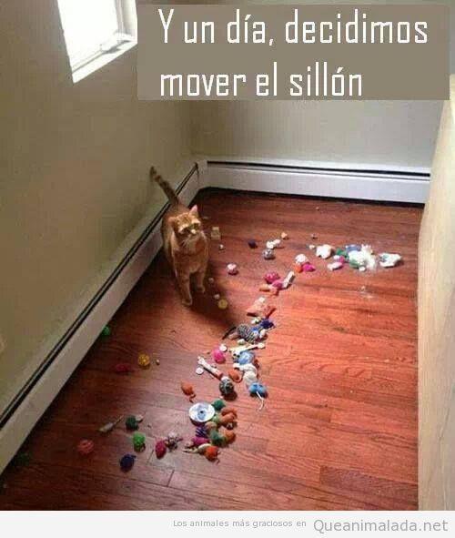Foto graciosa de un gato y su alijo de objetos debajo del sofá