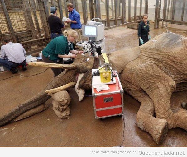 Veterinario con elefante