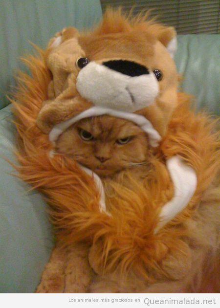 Foto graciosa de un gato con disfraz de león