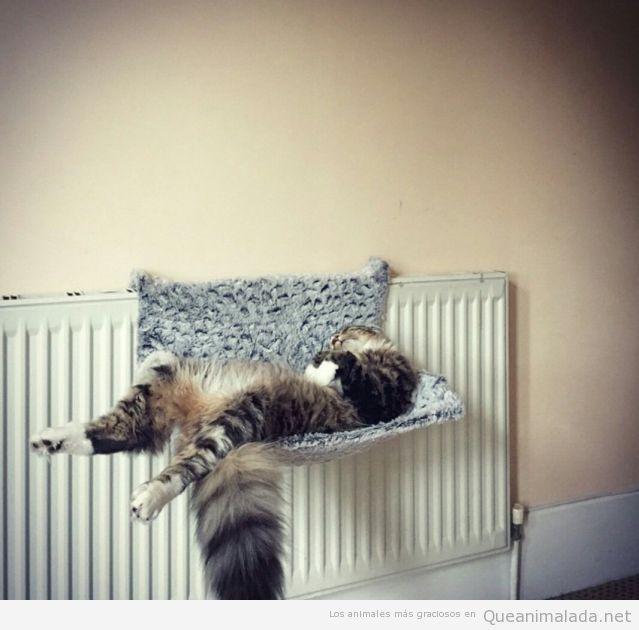 Foto graciosa gato durmiendo siesta en el radiador