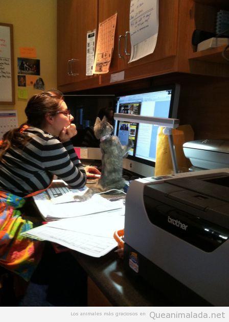 Foto graciosa gato mirando pantalla ordenador