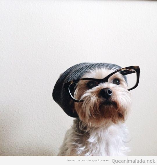 Perro hipster con gafas de pasta y gorro