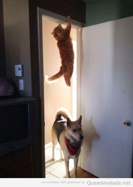 Foto graciosa gato escondido del perro colgado de la puerta