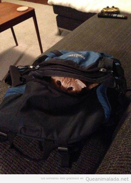 Foto graciosa gato dentro de una mochila