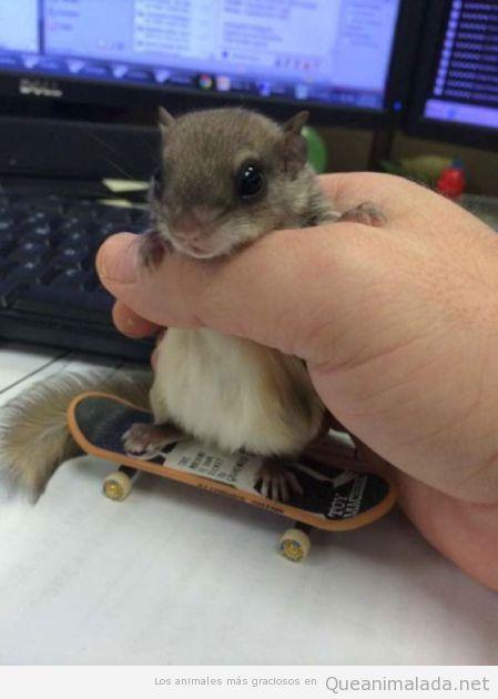 Foto graciosa de un hamster en un mini skate