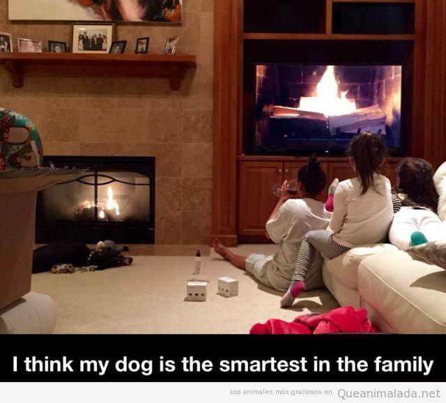 Foto graciosa perro al lado de la chimenea