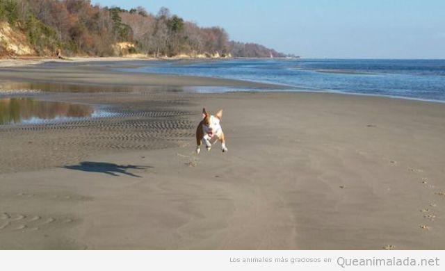 Foto graciosa de un perro feliz en la playa