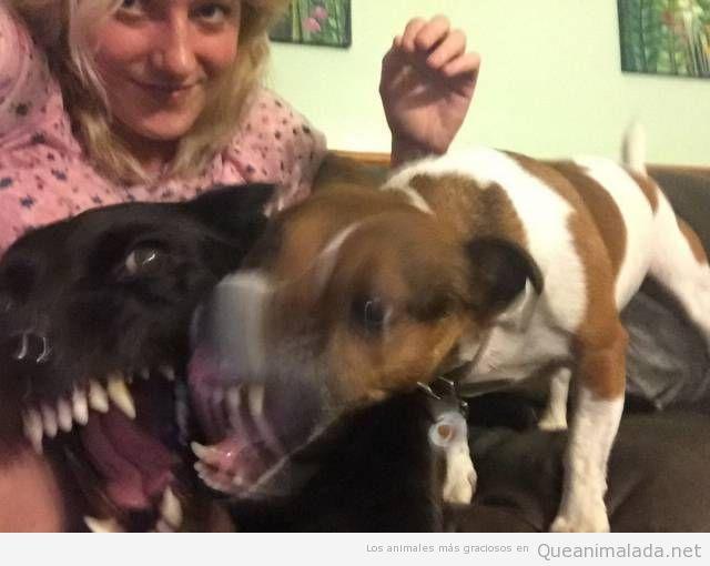 Foto divertida de dos perros