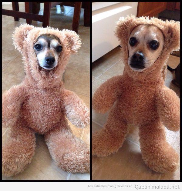 Perro con disfraz de oso de peluche