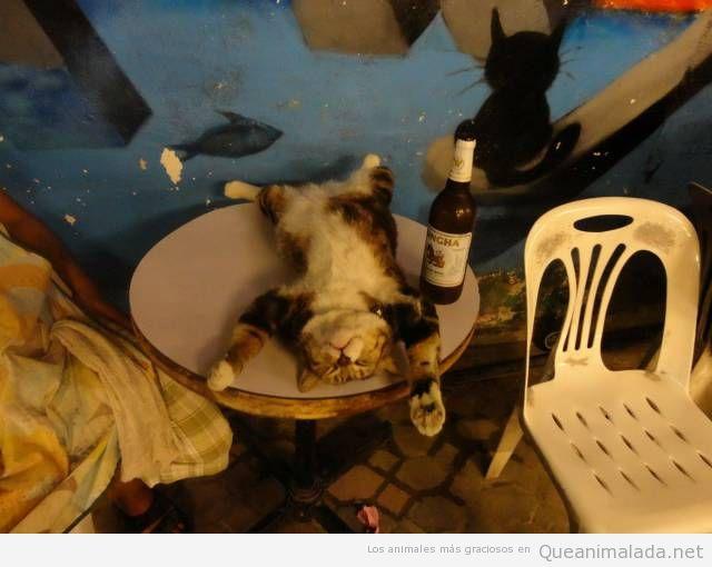 Foto graciosa de un gato dormido bocarriba